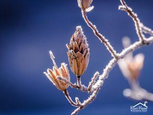 winter-
